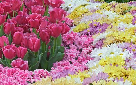 Обои Цветочное ассорти