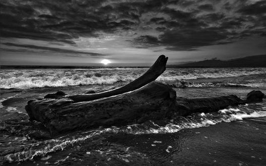 Обои Старый гнилой кусок бревна выбросило на берег