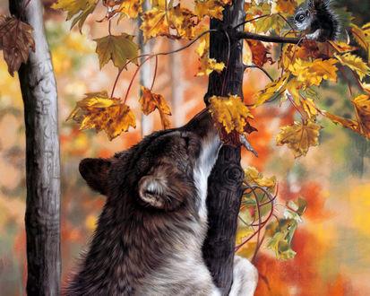 Обои Волк пристально смотрит на сидящую на ветке белку