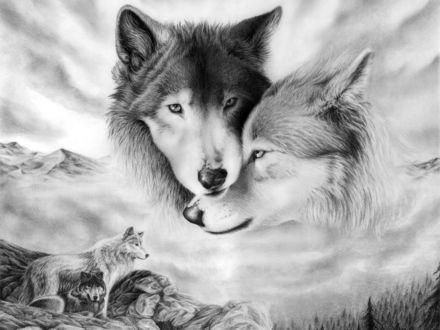 Обои Волчья любовь