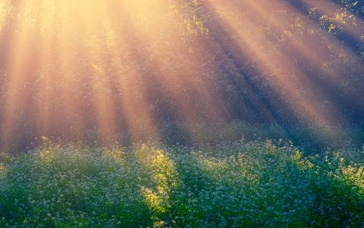Обои Солнечные лучи на поляне в лесу