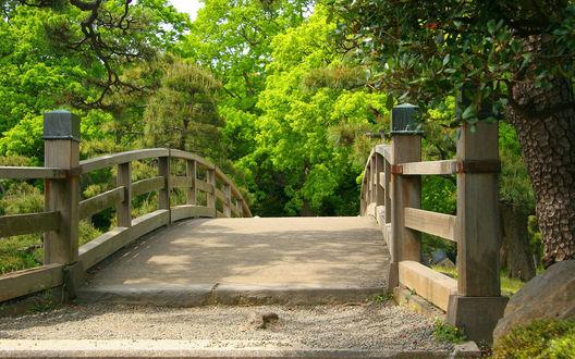 Обои Красивый деревянный мост в парке