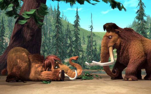 Обои Менни и Элли из мультфильма «Ледниковый период 2» разговор двух мамонтов