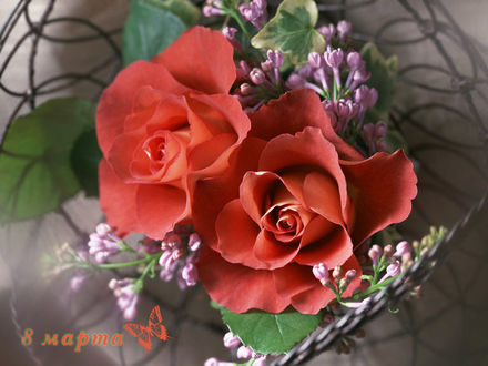 Обои Алые розы (8 марта)