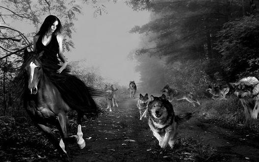 Обои погоня стаи волков за дошадью и ее наездницей