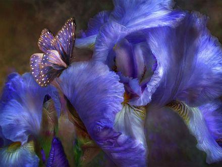 Обои Ирис с бабочкой