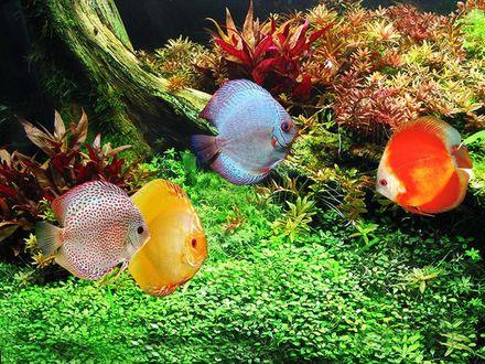 Обои Четыре цветные рыбки под водой устроили собрание