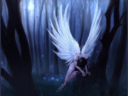 Обои Страдающий ангел в ночном лесу...