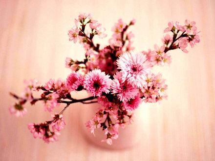 Обои Розовые васельки и веточки сакуры