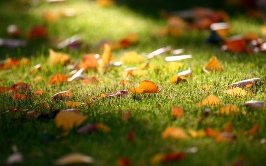 Обои Листва на траве