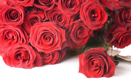 Обои Шикарные красные розы «Гран при»