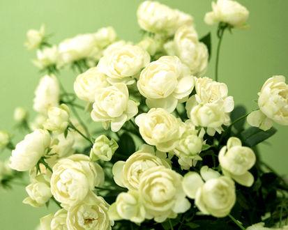 Обои Декоративные белые розочки