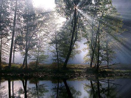 Обои Утреннее солнце сквозь листву деревьев