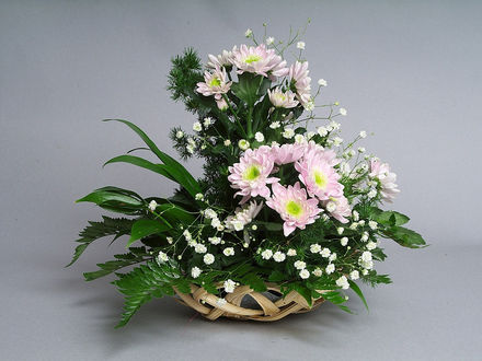 Обои Хризантемы и папоротник