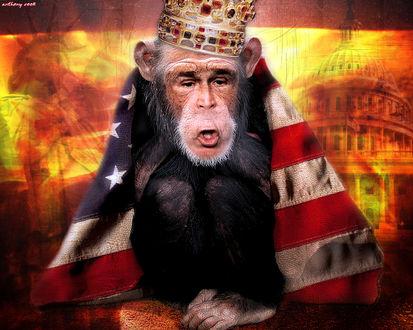 Обои Обезьяна, закутанная во флаг Америки и с лицом Буша (anthony cook)