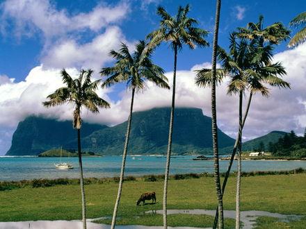 Обои Остров Lord Howe Австралии , пальмы , зелёный брег...