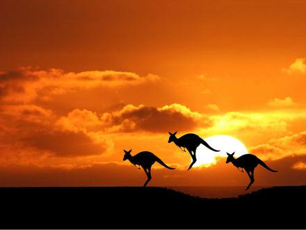 Обои Кенгуру в прыжке на фоне красивого заката...