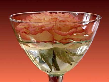Обои Роза в бокале с водой