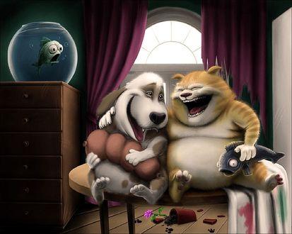 Обои Так вот ты какое, котяче-собачее счастье...