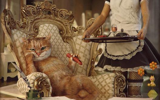 Обои Обложка книги Терри Пратчетта 'Кот без дураков'