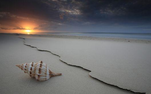 Обои Ракушка на морском берегу