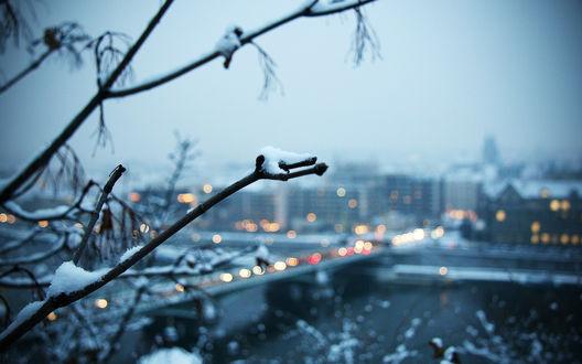 Обои Зимний город и ветки во льду