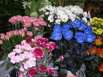 Обои Цветочный магазин