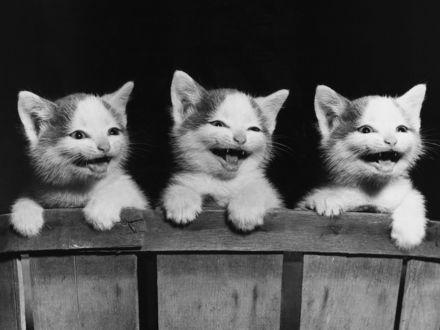 Обои Три смешных котёнка