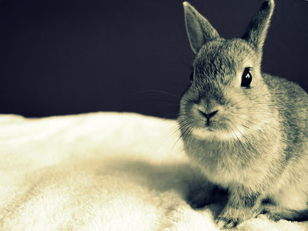 Обои Милый серый кролик