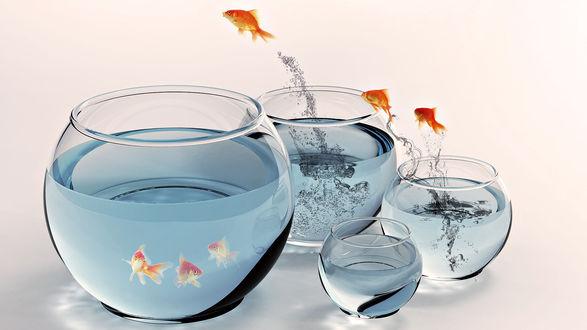 Обои Золотые рыбки прыгают из аквариума в аквариум