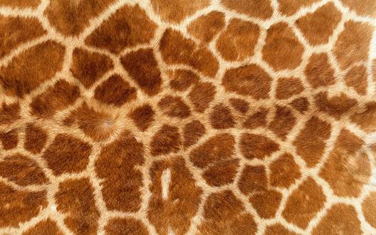 Обои Кожа жирафа