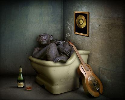Обои Обезьяна с сигаретой сидит в сидячей ванной, курит и пьет (for VIP only)