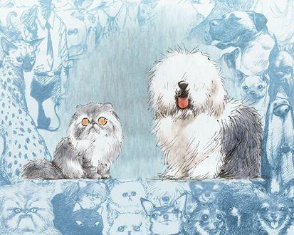 Обои Кот искоса смотрит на собаку, на фоне много нарисованных собак и кошек