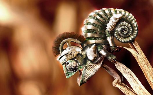 Обои Хамелеончик в доспехах и шлеме Римлян
