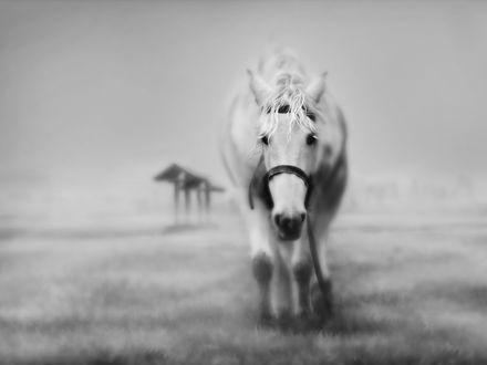 Обои Силуэт лошади выступает из густого тумана