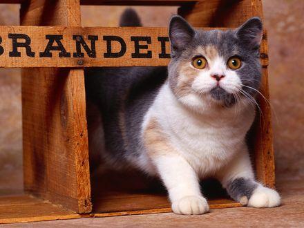 Обои Кот сидит в домике, сверху дощечка, видна часть надписи *..RANDED..*