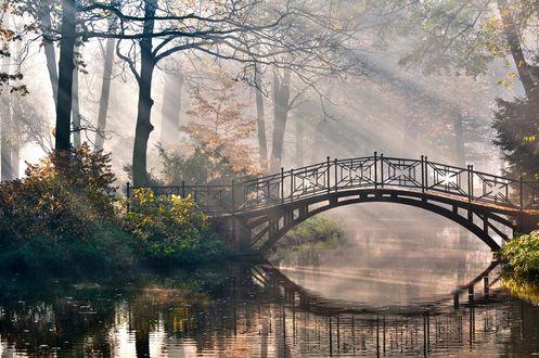Обои Изящный мостик через речку в лесном парке