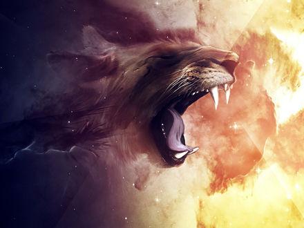 Обои Пасть львицы по середине между ночью и днем