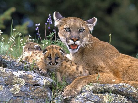 Обои Мама со своим кошачьим семейством