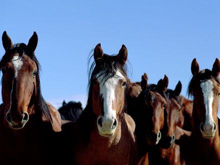 Обои милые морды лошадей
