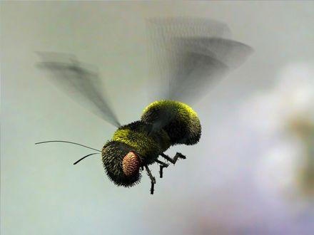 Обои Пчёлка