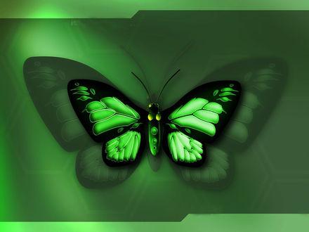 Обои Красивая зелёная бабочка