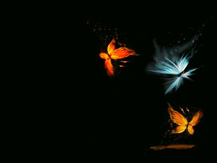 Обои две огненные и одна ледяная бабочки