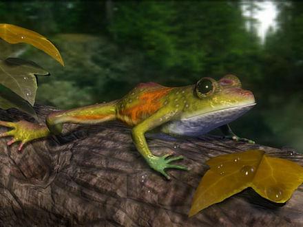 Обои Симпатичная лягушка сидит на дереве