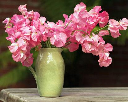 Обои Душистые розовые цветочки гороха в горшке