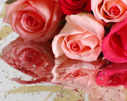Обои Нежные розы на зеркале