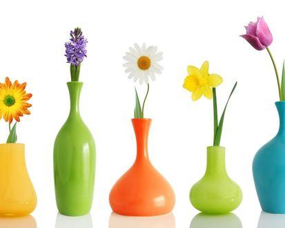 Обои Цветные вазы, в каждой по цветочку