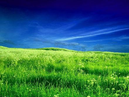 Обои Синее небо и зеленое поле