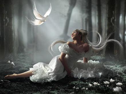 Обои Белый голубь прилител к плачущей девушке