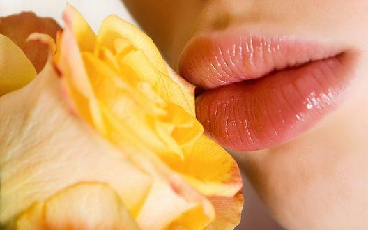 Обои Губы девушки и желтая роза